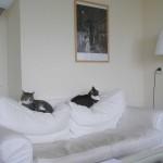 Katten op de bank